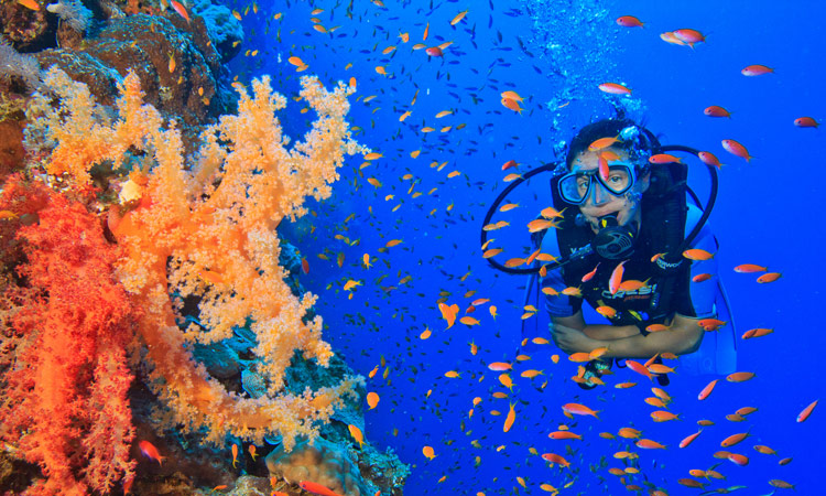 Diving in Dahab with Fantasea