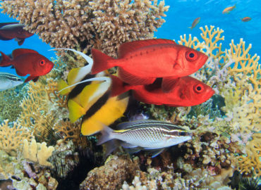Diverse marine Life at Dahab Three Pools Dive Site