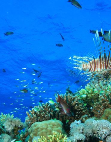 Ras Abu Calum Underwater