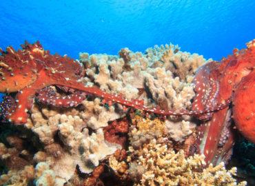 Octopus at Lighthouse Dahab