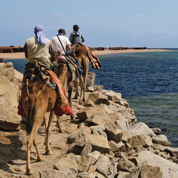 Dahab Dive Sarafi - Ras Abu Calum Camel Dive Safari